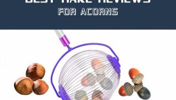 6 Best Rake for Acorns Reviews in 2020