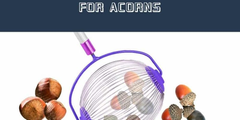 Best Rake for Acorns Reviews in 2020
