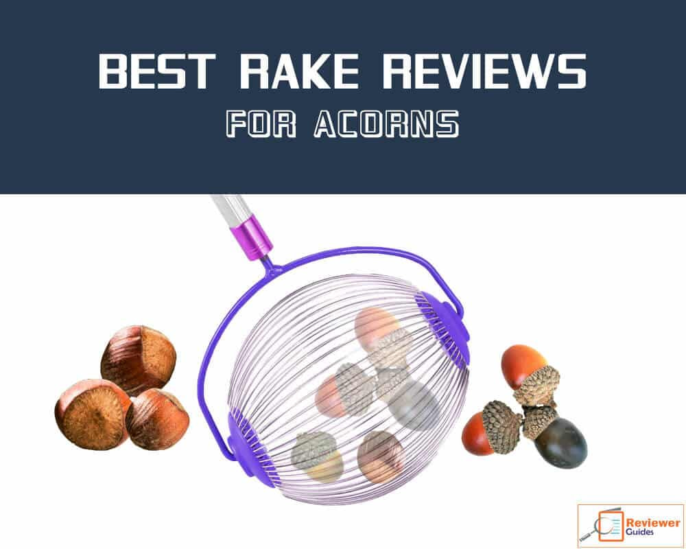 How to Choose Best Rake for Acorns!